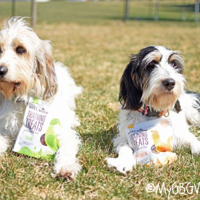 Irresistible Training Treats For Your Dog