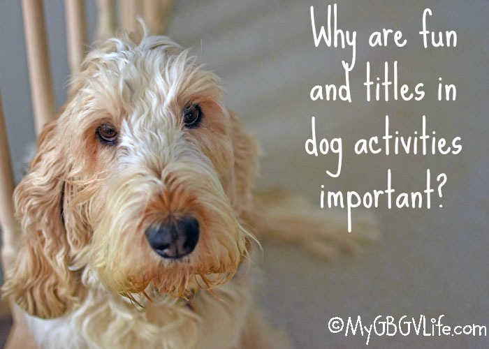 My GBGV LIfe Why Are Fun And Titles In Dog Activities Important?