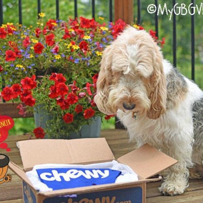 A Surprise Package For The Holiday Weekend #ChewyInfluencer