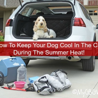 How To Keep Your Dog Cool In The Car During The Summer Heat