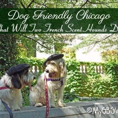 Dog Friendly Chicago – What Will Two French Scent Hounds Do?
