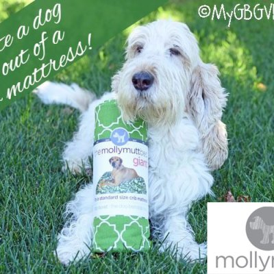 Create A Dog Bed Out Of A Crib Mattress With Molly Mutt