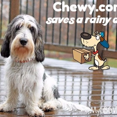 Dr. Tim's Saves A Rainy Day For Madison #ChewyInfluencer
