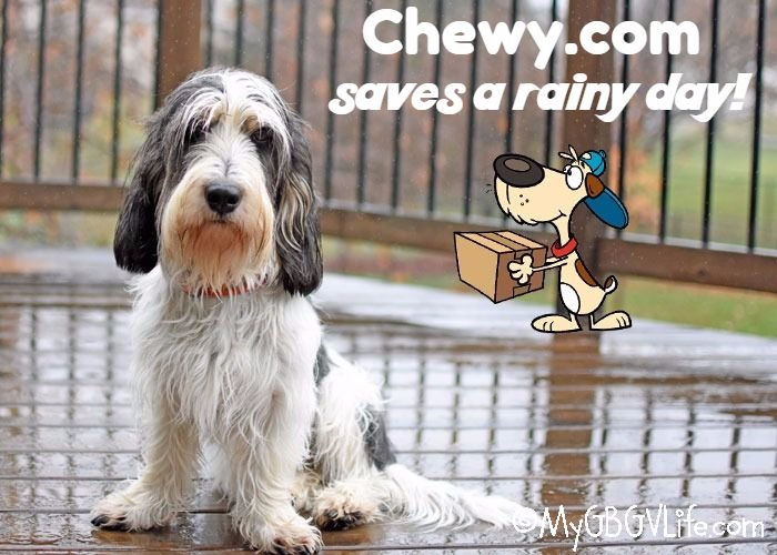 My GBGV Life Dr. Tim's Saves A Rainy Day For Madison #ChewyInfluencer