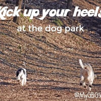 Discovering Dog Park Fun At Bryant Lake