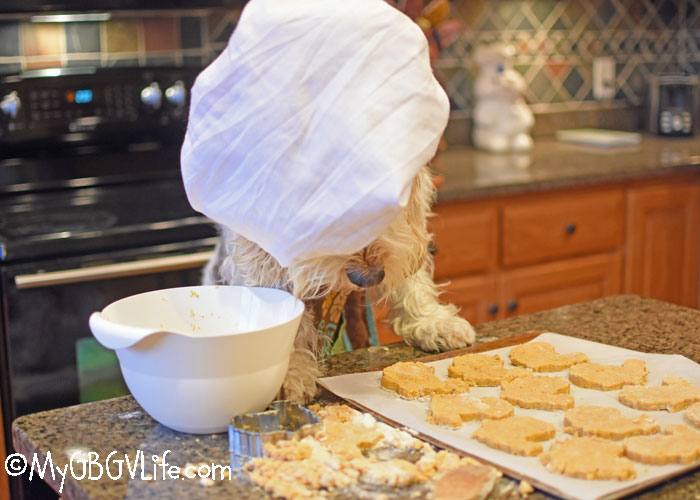My GBGV Life Emma's Pumpkin Cookies With A Cornucopia Of Flavor