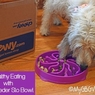 Slowing Speedy Gonzales At Mealtime #ChewyInfluencer