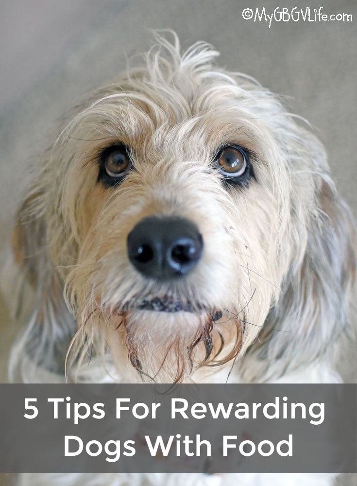 My GBGV Life 5 Tips For Rewarding Dogs With Food