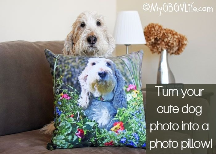 My GBGV Life Turn Your Favorite Dog Photo Into An Adorable Photo Pillow - Giveaway!