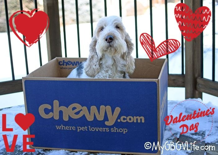My GBGV Life A Valentines Fashion Must Have For Dogs #ChewyInfluencer