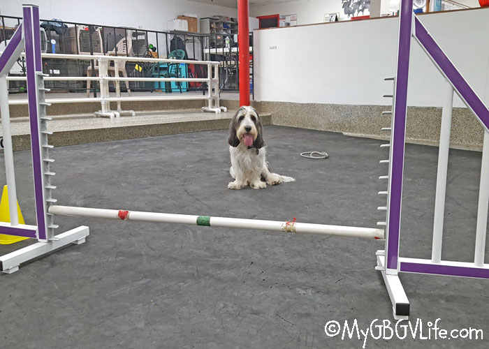 My GBGV Life Madison And Agility Is A Slow Process