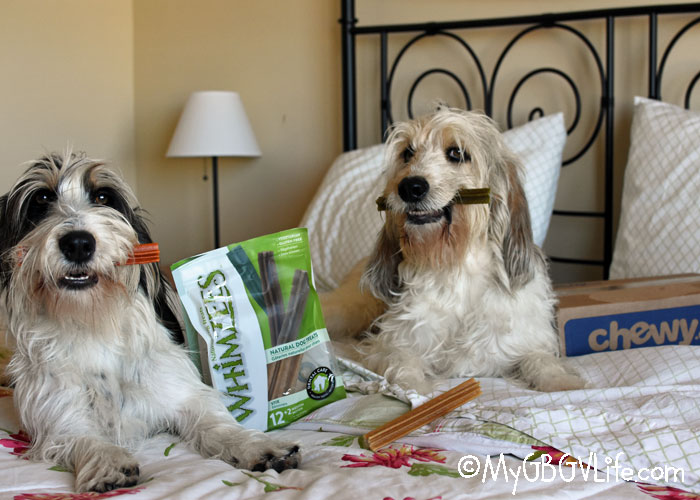 My GBGV Life Keep Teeth Healthy With Whimzees Dog Treats #ChewyInfluencer