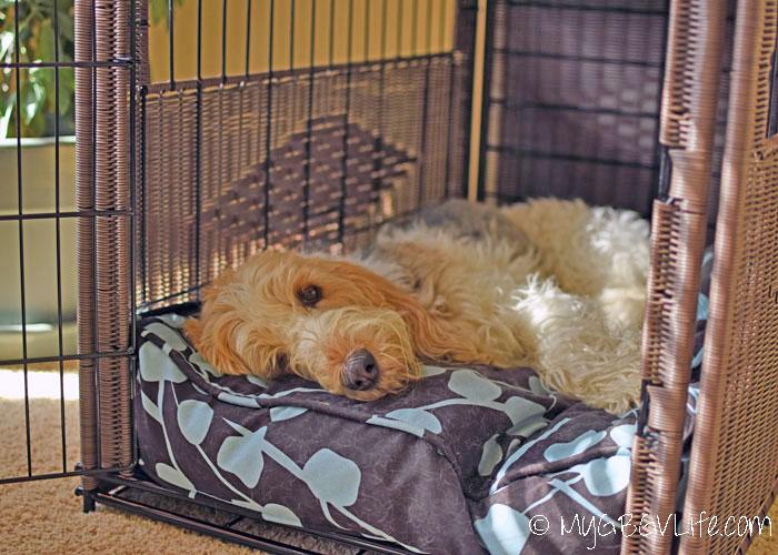 My GBGV Life Say Goodbye To Nasty Dog Breath #ChewyInfluencer