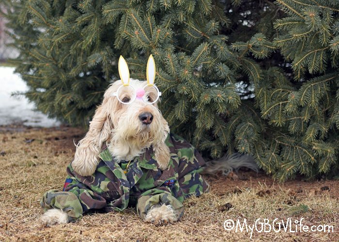 My GBGV Life The Latest Camouflage for Wabbit Hunters
