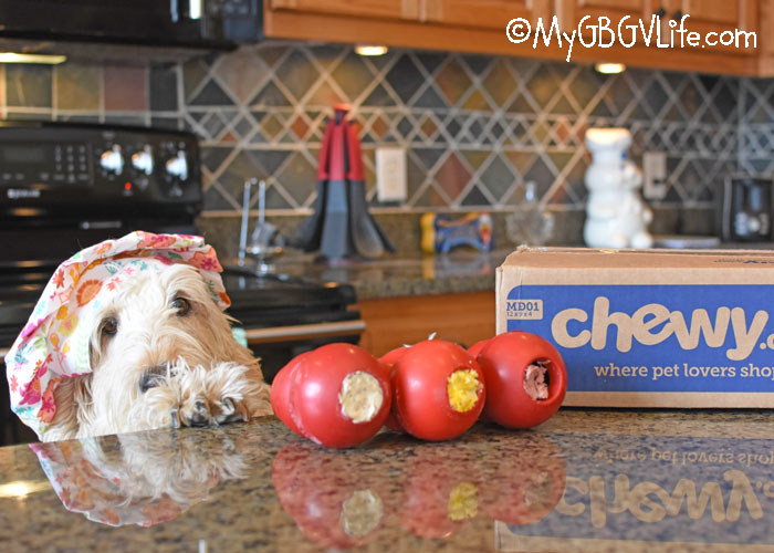 My GBGV Life 5 Reasons Why You Need Multiple Kongs #ChewyInfluencer