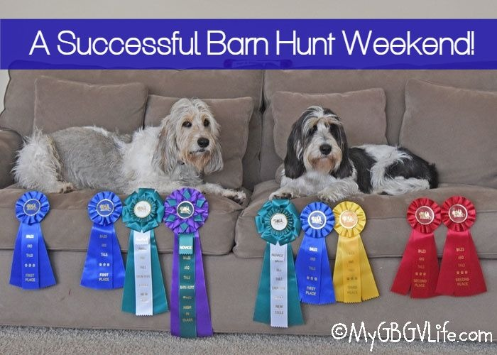 My GBGV Life 2 RATN Titles - A Successful Barn Hunt Weekend!