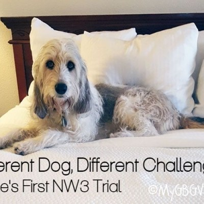 Different Dogs, Different Challenges – Bailie's First NW3