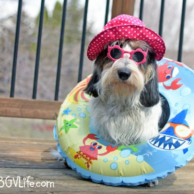 Did Someone Say Pool Party?