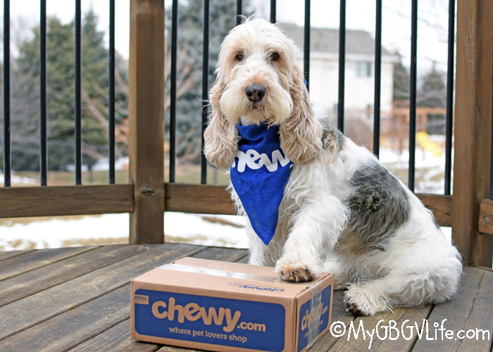 My GBGV Life When Your Dog Doesn't Have Time For A Marrow Bone #ChewyInfluencer