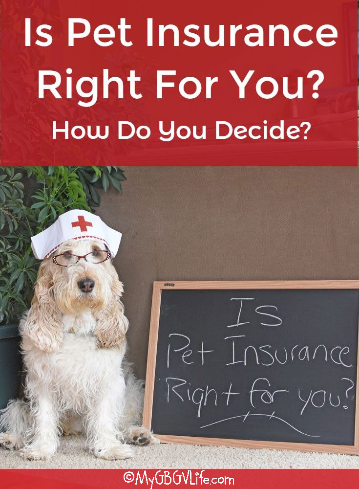 My GBGV Life Is Pet Insurance Right For You? How Do You Decide?