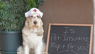 Is Pet Insurance Right For You? How Do You Decide?