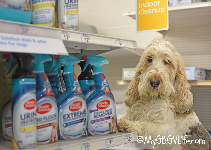 My GBGV Life Clean Pet Messes Easily With Simple Solution Now At Petco - Giveaway