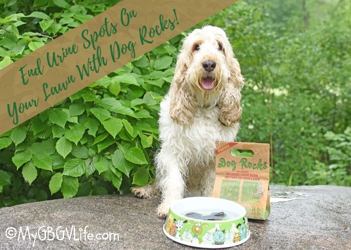 End Urine Spots On Your Lawn With Dog Rocks – Giveaway