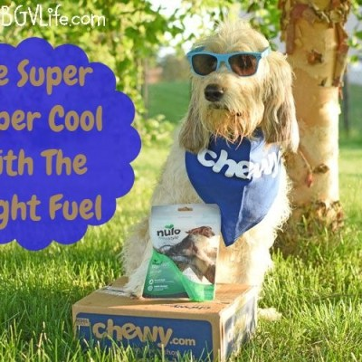 Be Super Duper Cool With The Right Fuel #ChewyInfluencer