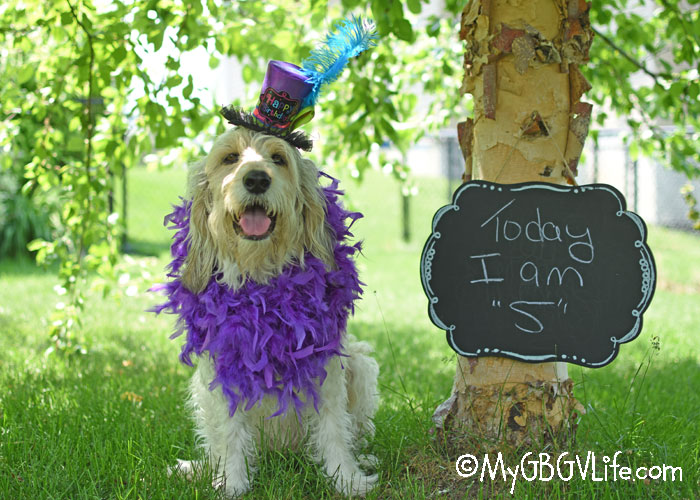 My GBGV Life 5 Is Fun! Bailie's 5th Birthday Party Makes Smiles!