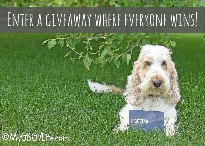 Make Dog Walking More Fun And Convenient With Mighty Paw – Everybody Wins Giveaway