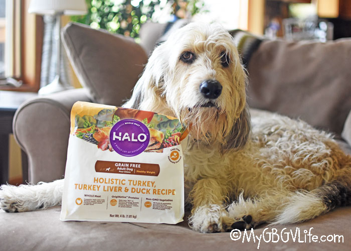 My GBGV Life Feed Your Dog Real Food For Real Dogs