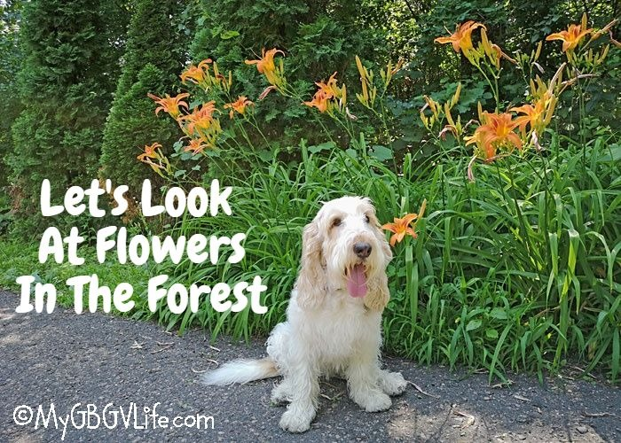 My GBGV Life Flowers In The Forest On Flower Friday