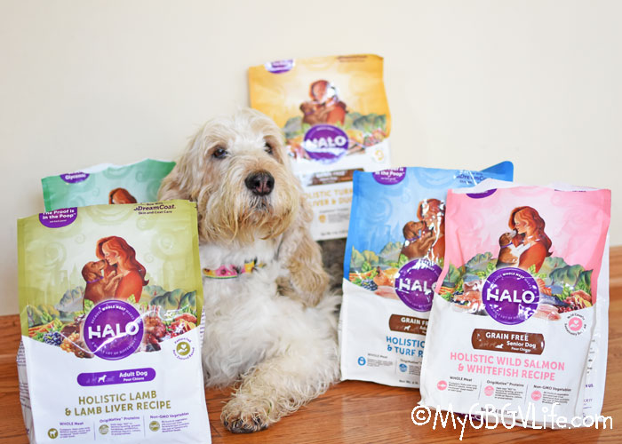 Feed Your Dog Real Food For Real Dogs
