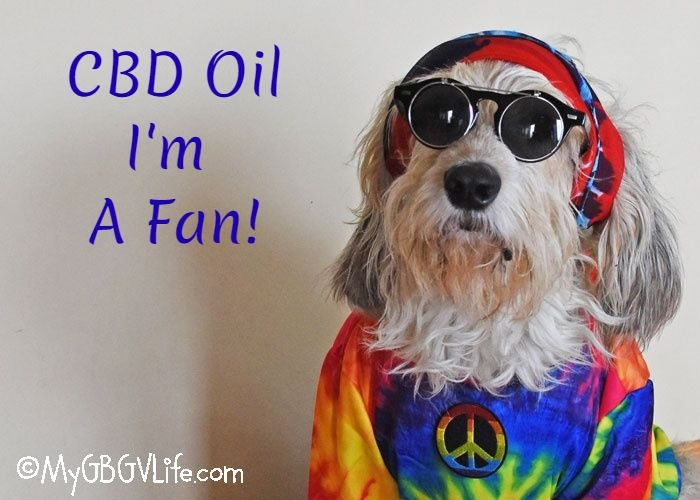 My GBGV Life What is CBD Oil All About?