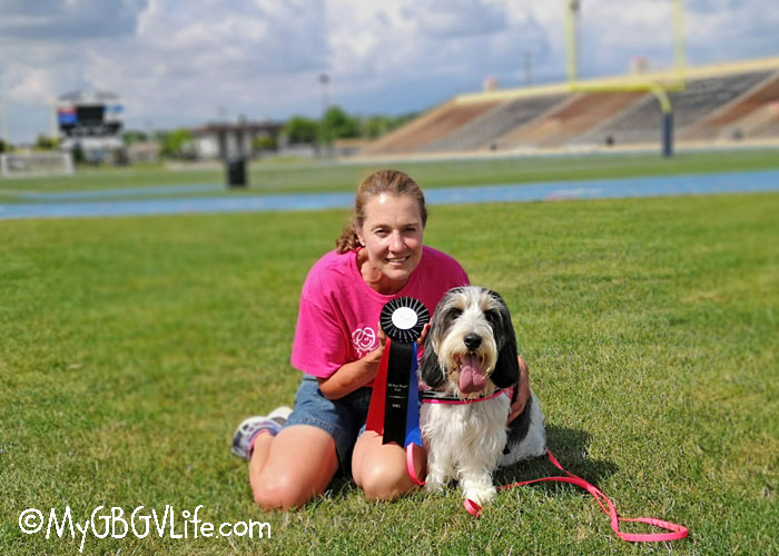 My GBGV Life Madison Earns Her First Nose Work Title In Joliet Illinois
