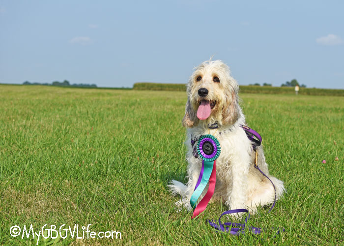 My GBGV Life A Dog Sports Road Trip - Part 1 De Land, IL