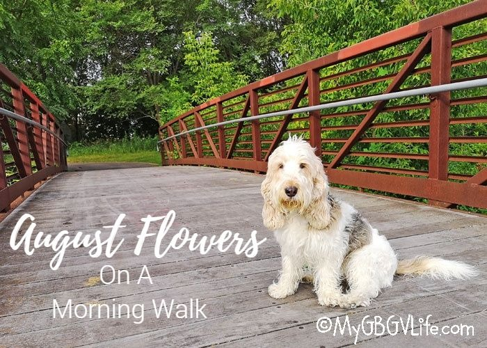 My GBGV Life August Flowers On A Morning Walk