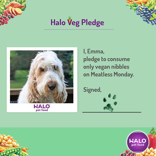 My GBGV Life Has Your Dog Joined the #MeatlessMonday Movement? Maybe She Should!