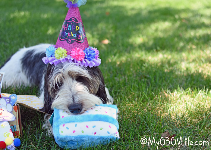 My GBGV Life Surprise Your Pup With A Birthday Goody Box #ChewyInfluencer