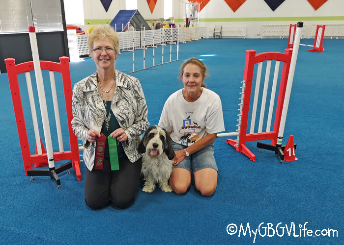 My GBGV LIfe Madison's First AKC Agility Trial - A Learning Experience