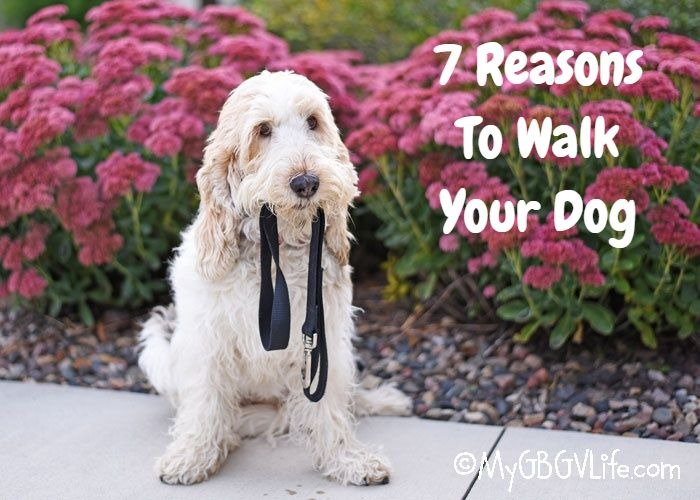 7 Reasons To Walk Your Dog – National Walk Your Dog Week