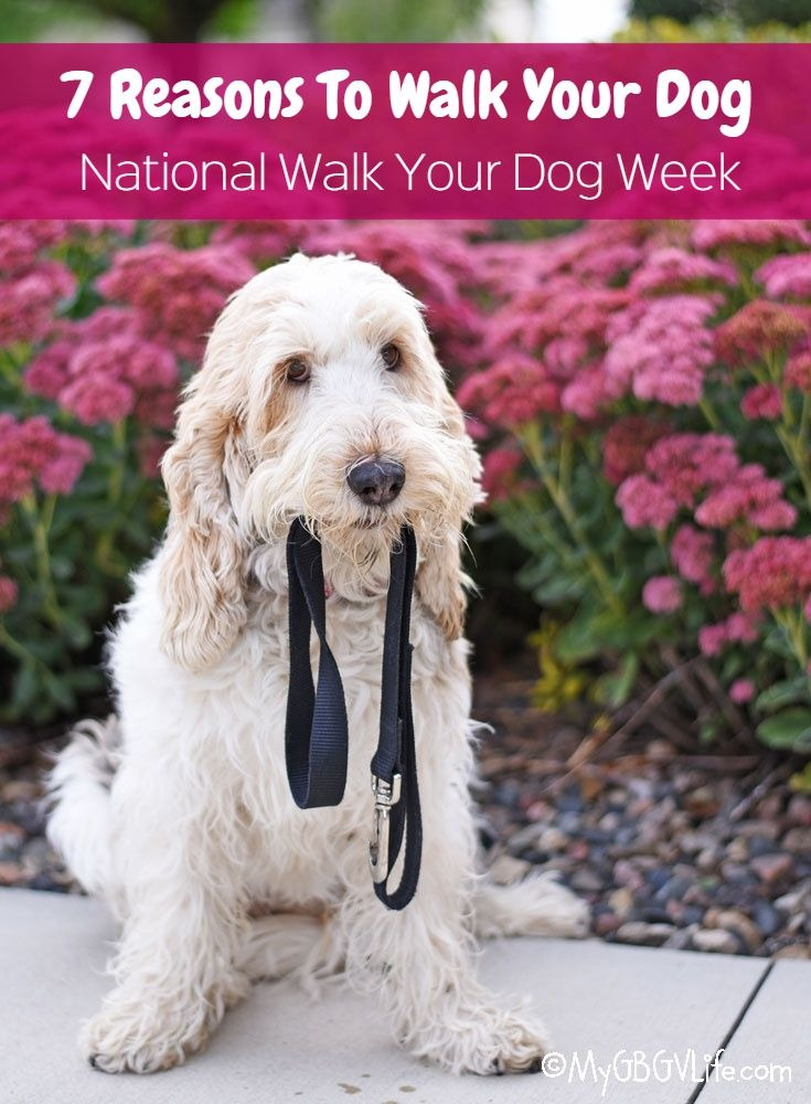 My GBGV Life 7 Reasons To Walk Your Dog - National Walk Your Dog Week