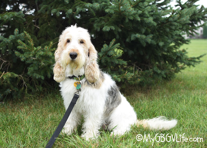 My GBGV Life Our Top 5 Walking Accessories - For Dogs And Their Humans