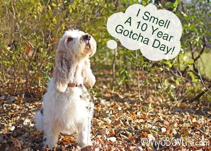 My GBGV Life I Smell A Ten Year Gotcha Day!