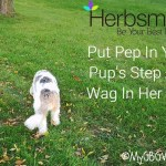 Natural Joint Support – Put Pep In Your Pup's Step And Wag In Her Tail – Giveaway!