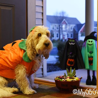 7 Tips For Dog Safety During Halloween Season