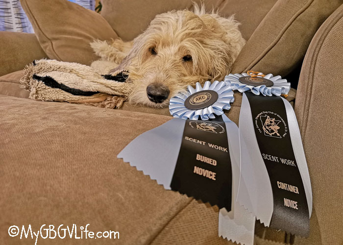 My GBGV Life Getting Started In AKC Scent Work