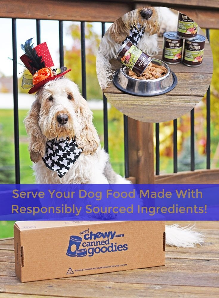 My GBGV Life Serve Your Dog Food With Responsibly Sourced Ingredients #ChewyInfluencer