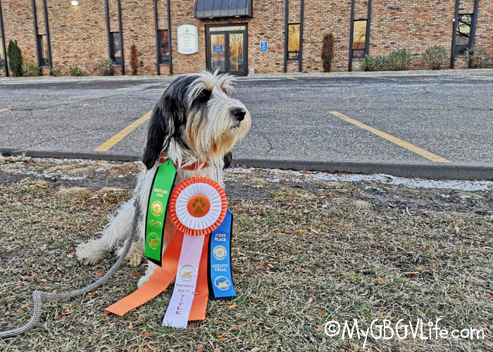 My GBGV Life My Novice Standard Preferred Agility Title