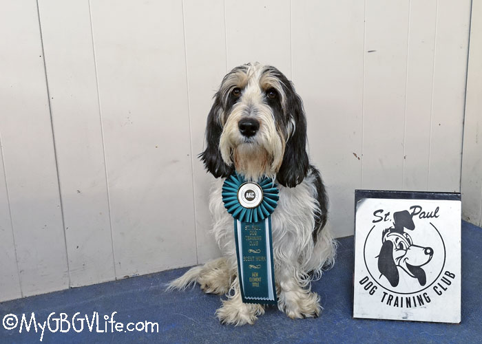 My GBGV Life My First Advanced Title In AKC Scent Work